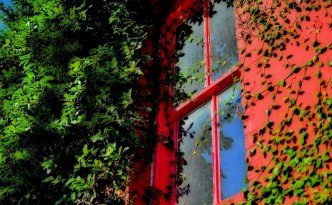 Red framed window with ivy